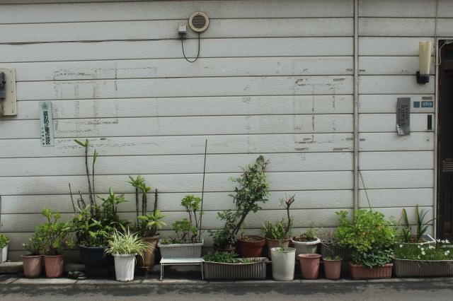 The neighbor's garden.