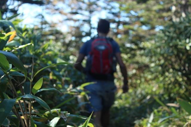 Subiendo por el bosque.