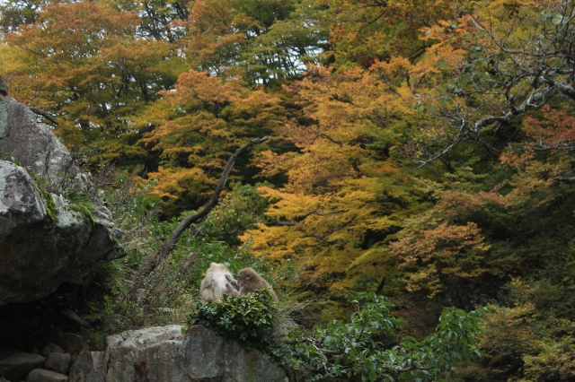 Monkeys in the mountains near Nagano!